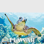 Binky - Hawaii Magnet