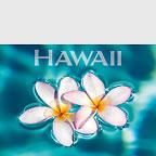 Aqua Plumerias - Hawaii Magnet