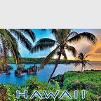 Where Da Coconuts Grow - Hawaii Magnet