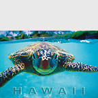 Honu (Turtle)  - Hawaii Magnet