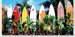 Old Surfboards Never Die - Hawaii Panoramic Magnet