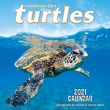 Hawaiian Sea Turtles - 2021 Deluxe Hawaiian Wall Calendar